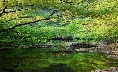 The green Nature of Byeonsan Peninsula National Park