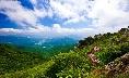green Namdeogyusan Mountain and floral fragrance of Lilium cernuum Komar